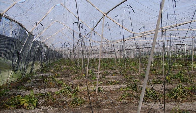 Plan de Seguros Agrarios Combinados