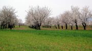 proyectos agroecológicos