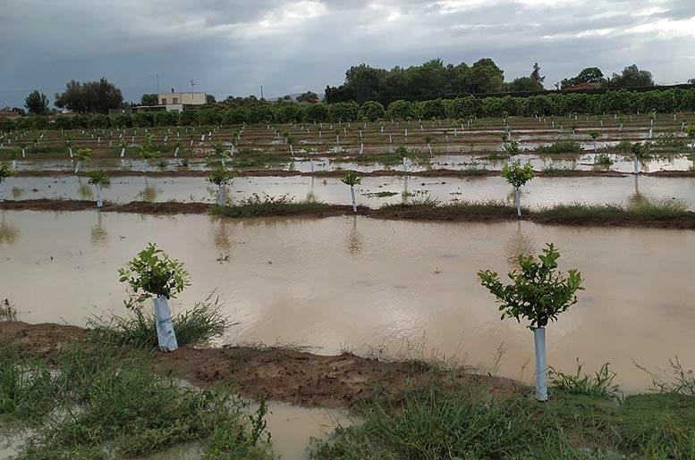 balance agrario 2019
