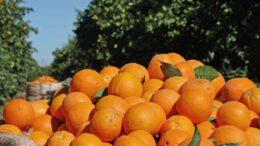 Campaña naranja en Córdoba