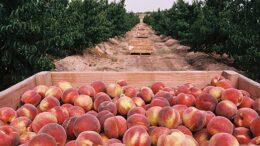 sector agroalimentario catalán