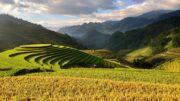 acuerdo de libre comercio con Vietnam