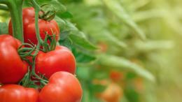 AgroFresh amplía la tecnología SmartFresh™