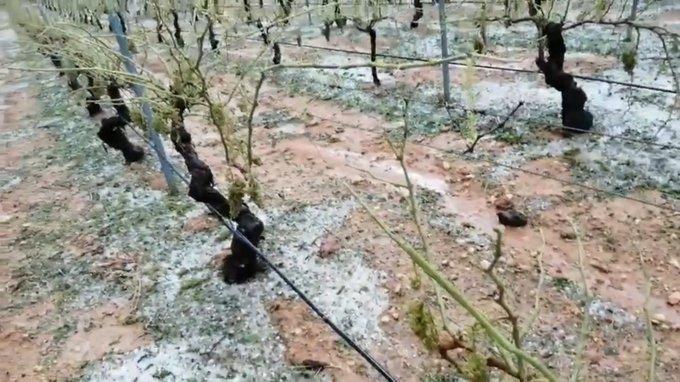 Daños por granizo en Utiel-Requena