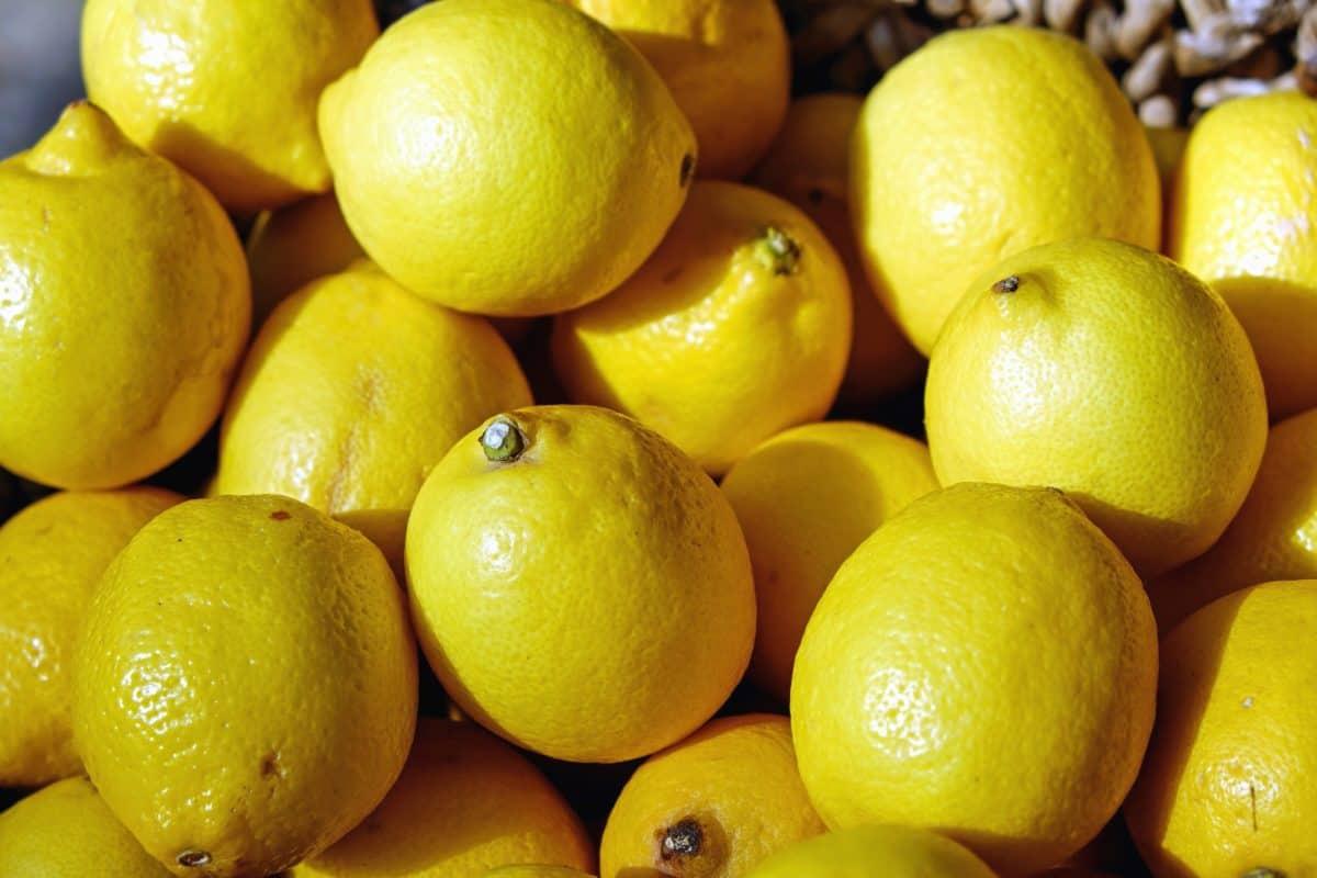 Aforo limón 2019/2020