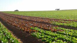 Retos y oportunidades del sector hortofrutícola murciano