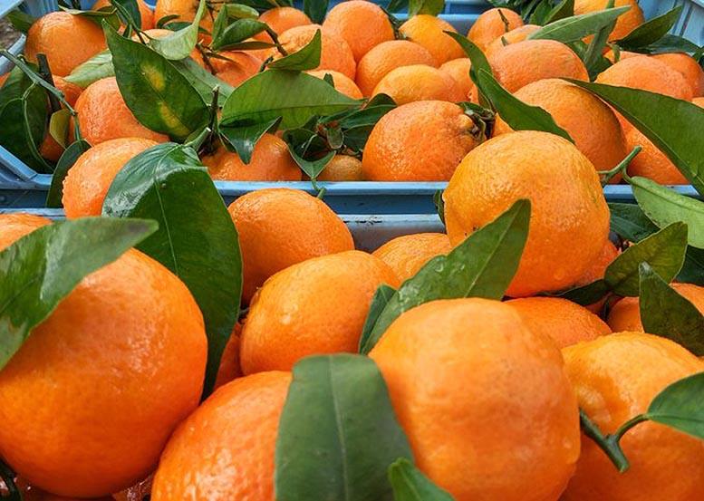 productos agroalimentarios europeos